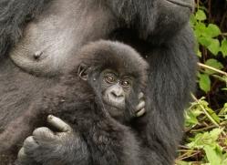 clare-hogston-5351-copyright-photographers-on-safari-com