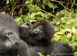 clare-hogston-5355-copyright-photographers-on-safari-com
