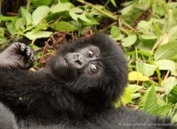 clare-hogston-5356-copyright-photographers-on-safari-com