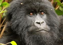 clare-hogston-5357-copyright-photographers-on-safari-com