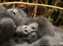 clare-hogston-5358-copyright-photographers-on-safari-com