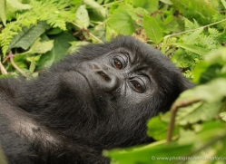 clare-hogston-5359-copyright-photographers-on-safari-com