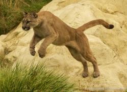 colin-langford-5363-copyright-photographers-on-safari-com