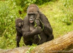 colin-langford-5560-copyright-photographers-on-safari-com