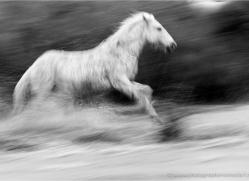 david-edwards-5370-copyright-photographers-on-safari-com