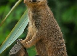 david-gorlay-5571-copyright-photographers-on-safari-com
