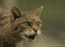 derek-nutley-5574-copyright-photographers-on-safari-com
