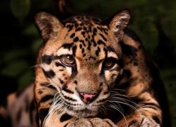 diana-knight-5576-copyright-photographers-on-safari-com
