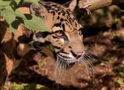 diana-knight-5580-copyright-photographers-on-safari-com