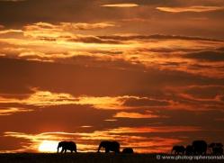 diana-knight-5615-copyright-photographers-on-safari-com