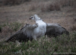 diana-knight-5617-copyright-photographers-on-safari-com