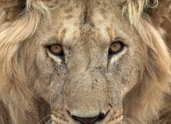 diana-knight-5618-copyright-photographers-on-safari-com