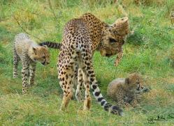 gary-maynard-5581-copyright-photographers-on-safari-com