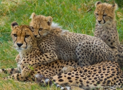gary-maynard-5582-copyright-photographers-on-safari-com