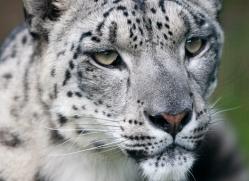 gary-stevens-5377-copyright-photographers-on-safari-com