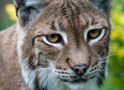 gary-stevens-5378-copyright-photographers-on-safari-com