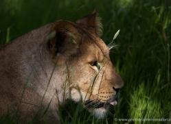 howard-wright-5584-copyright-photographers-on-safari-com