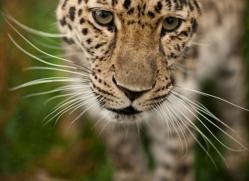 hugh-harkness-5393-copyright-photographers-on-safari-com