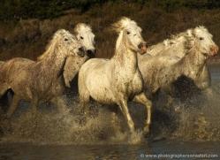 jane-nevin-5399-copyright-photographers-on-safari-com