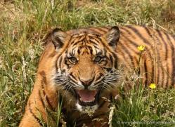 jane-storer-5508-copyright-photographers-on-safari-com