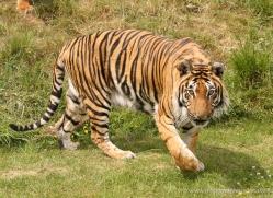 jane-storer-5509-copyright-photographers-on-safari-com