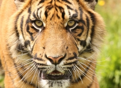 jane-storer-5510-copyright-photographers-on-safari-com