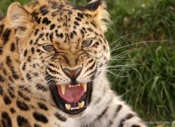 jane-storer-5511-copyright-photographers-on-safari-com