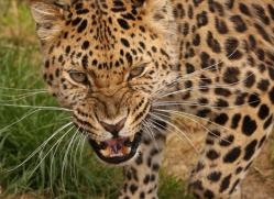 jane-storer-5512-copyright-photographers-on-safari-com