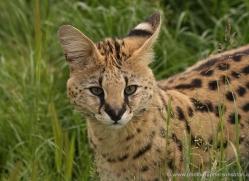 jane-storer-5514-copyright-photographers-on-safari-com