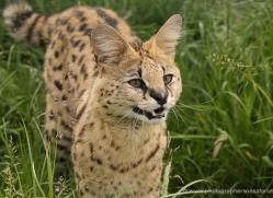 jane-storer-5515-copyright-photographers-on-safari-com