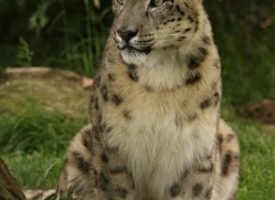 jane-storer-5517-copyright-photographers-on-safari-com