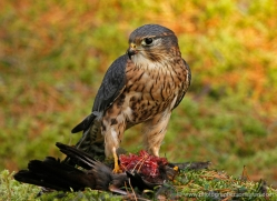 jean-parry-5404-copyright-photographers-on-safari-com