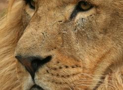 jo-mildenhall-5585-copyright-photographers-on-safari-com