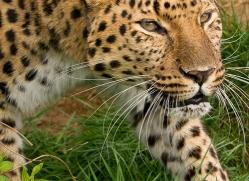 ken-weldon-5411-copyright-photographers-on-safari-com