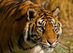 ken-weldon-5412-copyright-photographers-on-safari-com