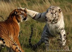 kim-stoute-purvis-5413-copyright-photographers-on-safari-com