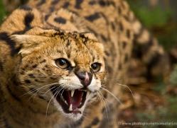 lisa-ward-5414-copyright-photographers-on-safari-com