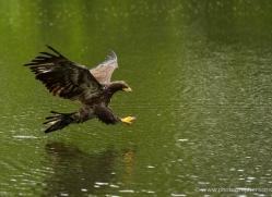 lister-cumming-5418-copyright-photographers-on-safari-com