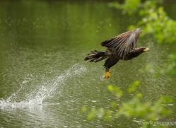 lister-cumming-5419-copyright-photographers-on-safari-com
