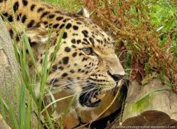 malcolm-earnshaw-5422-copyright-photographers-on-safari-com