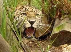 malcolm-earnshaw-5423-copyright-photographers-on-safari-com