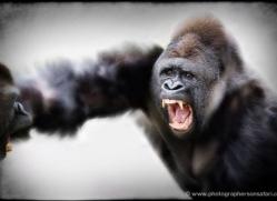 marilyn-taylor-5425-copyright-photographers-on-safari-com