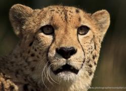 mark-davies-5427-copyright-photographers-on-safari-com