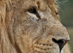 mark-davies-5428-copyright-photographers-on-safari-com