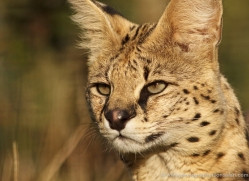 mark-davies-5429-copyright-photographers-on-safari-com