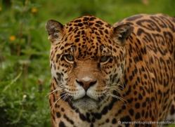 marleen-moxon-5431-copyright-photographers-on-safari-com