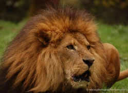 marleen-moxon-5432-copyright-photographers-on-safari-com