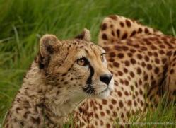 marleen-moxon-5434-copyright-photographers-on-safari-com