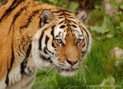marleen-moxon-5435-copyright-photographers-on-safari-com