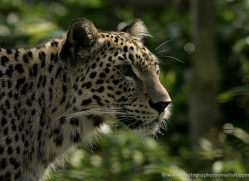 maxine-husselbee-5594-copyright-photographers-on-safari-com